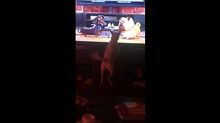Dog jumps for joy at animated pets on TV