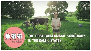 First animal sanctuary farm opens in Baltic states - Video