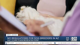 No regulations for dog breeders in AZ