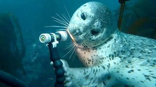 I can seal you – Adorable moment seal pup plays with divers flash light