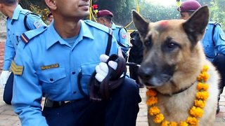 Adorable Footage Show Dogs Being Worshipped By Nepalese Policemen - Video