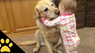 Cute Dogs And Charming Babies Compilation - Video
