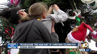 Troublesome tree now part of Christmas celebration - Video