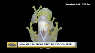 New glass frog species discovered