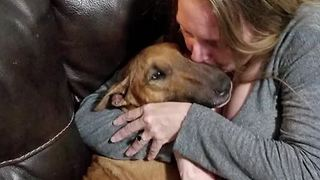 Stolen dog returned to family - Video