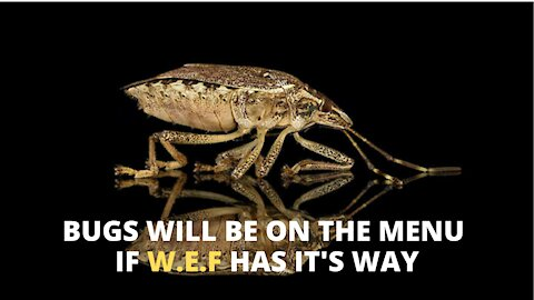 WEEDS BUGS and SEWAGE and other breaking news