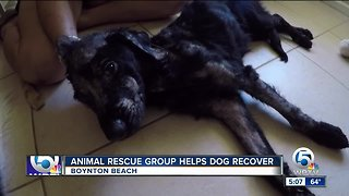 Dog abandoned in Miami now recovering at Boynton Beach animal rescue
