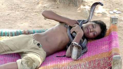 Seven year old boy feeds, bathes and sleeps with his three deadly snake best mates – despite bond leaving parents terrified