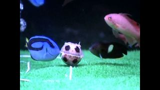 Fish Soccer - Video