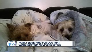 Family searching for dog that vanished from Novi vet's office - Video