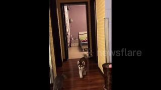Woman pranks her dog with tape over hallway - Video