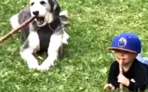 Branchin' Out: Kid Learns to Fetch Sticks in His Mouth With New Dog Friend - Video