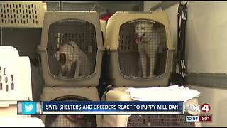 Southwest Florida activists, breeders react to CA puppy mill law - Video