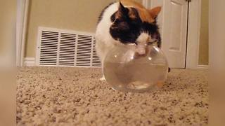 """""""Cat Drinks Water from Fish Bowl"""""""