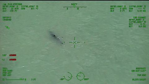 Helicopter crew's shark warning to paddle-boarders