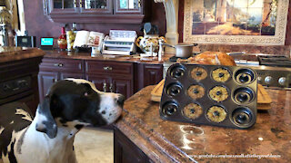 Funny Great Dane Inspects Turkey And Stuffing Donut Pan Recipe