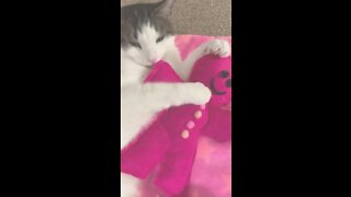 Cats go crazy for catnip infused toys