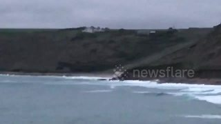 Dolphins spotted surfing off Cornish coast