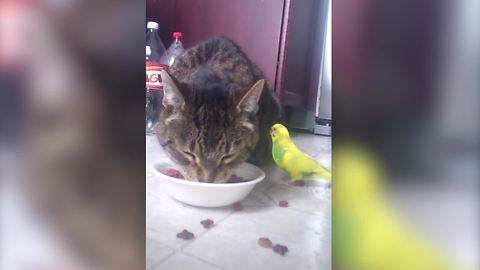 A Bird And A Cat Share A Meal Together