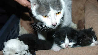 "Cat Gives Birth To ""Four Kittens And A Dog""  - Video"
