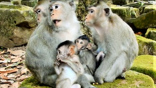 The Baby Monkey Want To Drink Milk - Video