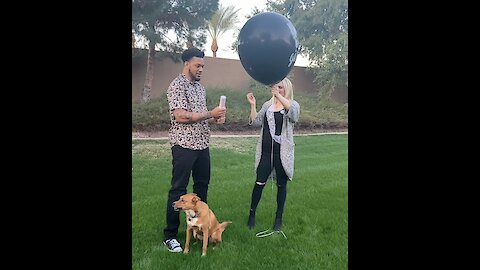 Unsuspecting dog wasn't prepared for his owner's gender reveal party