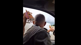 Driver Save Horse Running Loose on Houston Freeway