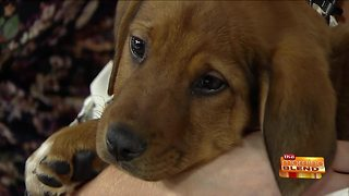Help for Pet Owners with Financial Struggles - Video