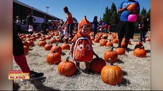 We talk with Tampa Bay Parenting Magazine about their complete guide to fall festivities - Video
