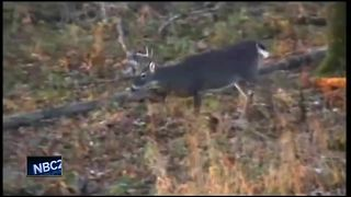 Two Waupaca County deer found with chronic wasting disease - Video
