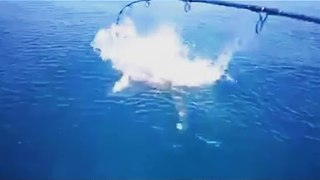 Shark Attacks Fish in Maldives - Video