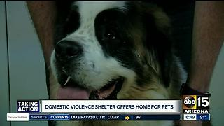 Valley domestic violence shelter offers home for pets - Video