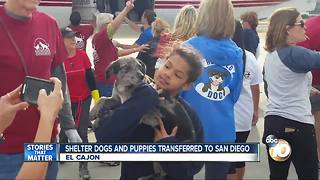 Shelter dogs and puppies transferred to San Diego