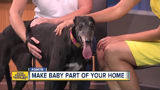 Feb. 11 Rescues in Action: Make Baby a part of your family