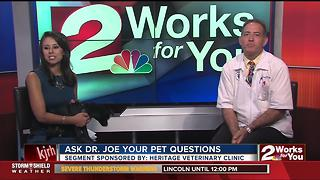 Dr. Joe visits midday to answer pet questions
