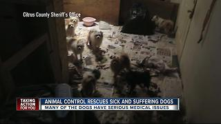 Tip about animal abuse in Citrus County leads to arrests, 36 dogs seized - Video