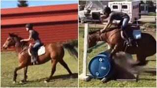 Stubborn horse refuses to jump over obstacle