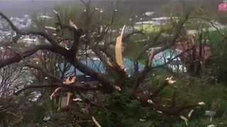 Irma Severely Damages Trees in Saint Thomas - Video