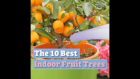 The Best 10 Best Indoor Fruit Trees