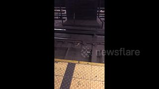 New York subway rats fight over slice of pizza