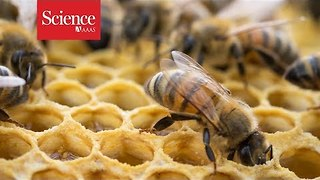Pesticides found in honey around the world - Video