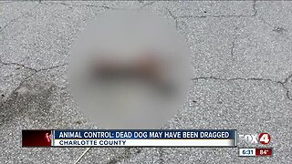 Animal Control Dead dog may have been dragged