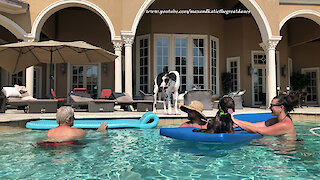 Great Dane watches doggy friend relax on pool floatie