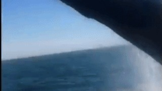 Humpback Whale Takes a Giant Leap, Stuns Boaters Off Cape Henry - Video