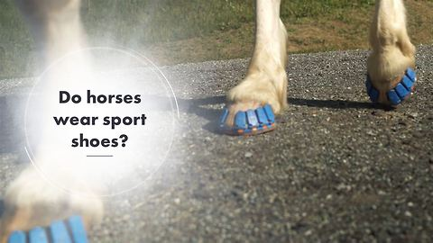 Will this invention ease the suffering of horses?