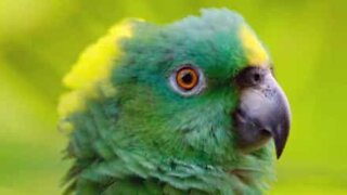 Parrot expresses an amazing mix of emotions