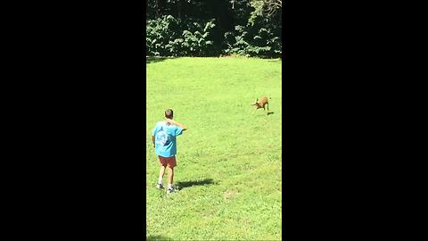 Eager Young Deer Really Wants To Play With Humans