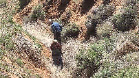 Newborn foal rescued from deep ravine in California mountains
