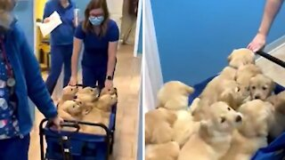 Wagonload of puppies captures the hearts of veterinary technicians