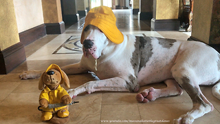 Great Dane hangs out with singing toy dog